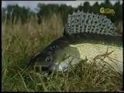Секреты рыболова от братьев Щербаковых