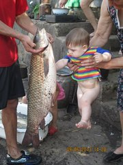 Рыбалка.Ставок платный,  50 грн. Из рыбы есть амур,  карась,  короп,  толс