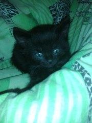 Черный котенок-мальчик ищет любящих хозяев.