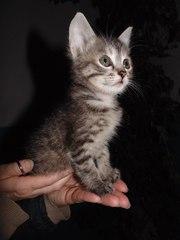 В хорошие руки отдам котенка!