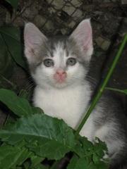 Котенок - девочка ищет заботливых хозяев!