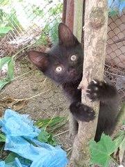 Черненькие пантерки отдаются в хорошие руки!