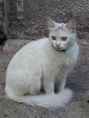 Молодая беленькая кошечка ищет дом!!!
