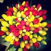 Продам Голландские тюльпаны оптом