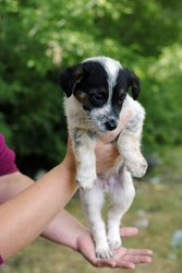 Самые красивые щенки в самые добрые руки!