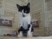 Черно-белый МАЛЬЧИК 3-4 месяца