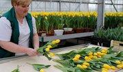 Жінки в теплиці з квітами робота в Польщі
